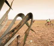detour-trails-tours-bike-battle-bike-bush-adventure-south-africa