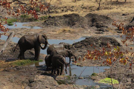 detour-trails-tours-matobo-hills-adventure-zimbabwe-bush-bikes
