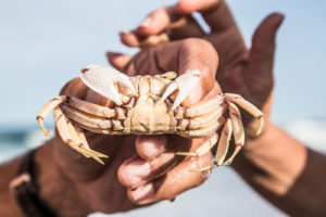 maputaland-amble-tours-mozambique-detour-trails-fat-bikes-adventure-sea-crab-mountain-biking