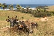 wild-coast-amble-fat-bikes-detour-trails-tours-bush-south-africa