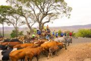 taste-zulu-kingdom-detour-trails-tours-cycling-bush-1000-hills-local-kzn-mountain-biking-south-africa